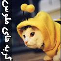 عکس های گربه های ناز و ملوس - قسمت دوم