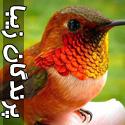 عکس های فوق العاده زیبا از پرندگان