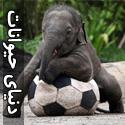 تصاویری بسیار زیبا از دنیای حیوانات - قسمت دوم
