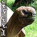 تصاویری از پیرترین جانور زنده جهان