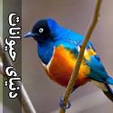 تصاویری بسیار زیبا از دنیای حیوانات - قسمت چهارم