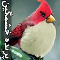 تصاويری از پرندگان خشمگين در دنيای واقعه ای