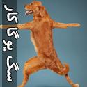تصاويری از سگ های يوگا كار