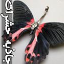 تصاويری از جاذبه های شگفت انگيز حشرات