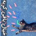تصاويری خنده دار از خيال بافی های گربه