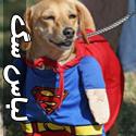 تصاویری خنده دار از پوشش سگ ها