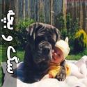 تصاویری جالب از دوستی بچه و سگ