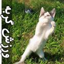 تصاویری از حرکات مخفی و جذاب از گربه ها