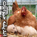 تصاویری از اندیشه های حیوانات راجع به موقعیت ها