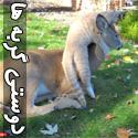 تصاویر جذاب و دیدنی از دوستی گربه ها
