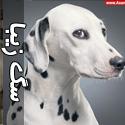 عکس هایی از سگ های زیبا