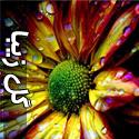 عکس هایی از گل های زیبا و رمانتیک - قسمت اول