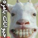 عکس های فوق العاده خنده دار از حیوانات - قسمت اول