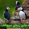 دنيای زيبای حيوانات