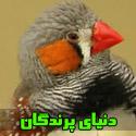 تصاویری از دنيای زيبای پرندگان
