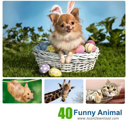 دانلود والپیپر با موضوع عکس های خنده دار حیوانات - Funny Animal Wallpapers Part 2