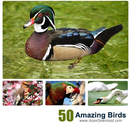 دانلود والپیپرهای پرندگان شگفت انگیز - Amazing Birds Wallpapers 50 Part 1