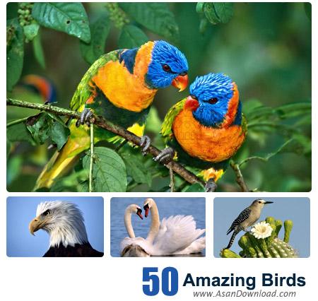 دانلود والپیپرهای پرندگان شگفت انگیز - Amazing Birds Wallpapers 50 Part 2