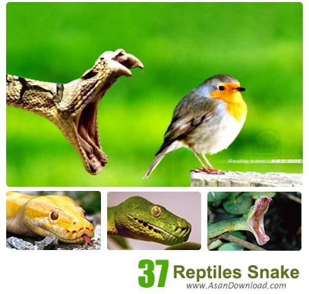 دانلود والپیپر با موضوع خزندگان مار - Reptiles Snake Wallpapers 37