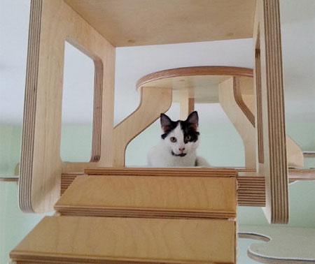 طراحی خانه برای گربه