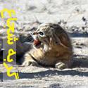 شجاع ترین گربه جهان