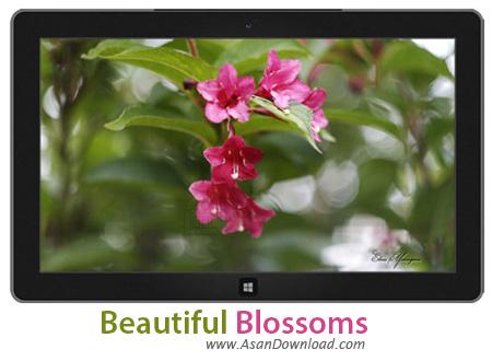 دانلود Beautiful Blossoms - پوسته ی زیبا برای ویندوز 7 ، 8 و 8.1